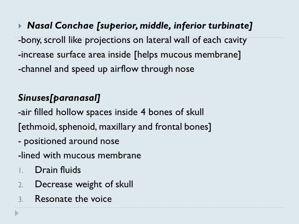 Nasal Conchae [superior, middle, inferior turbinate]